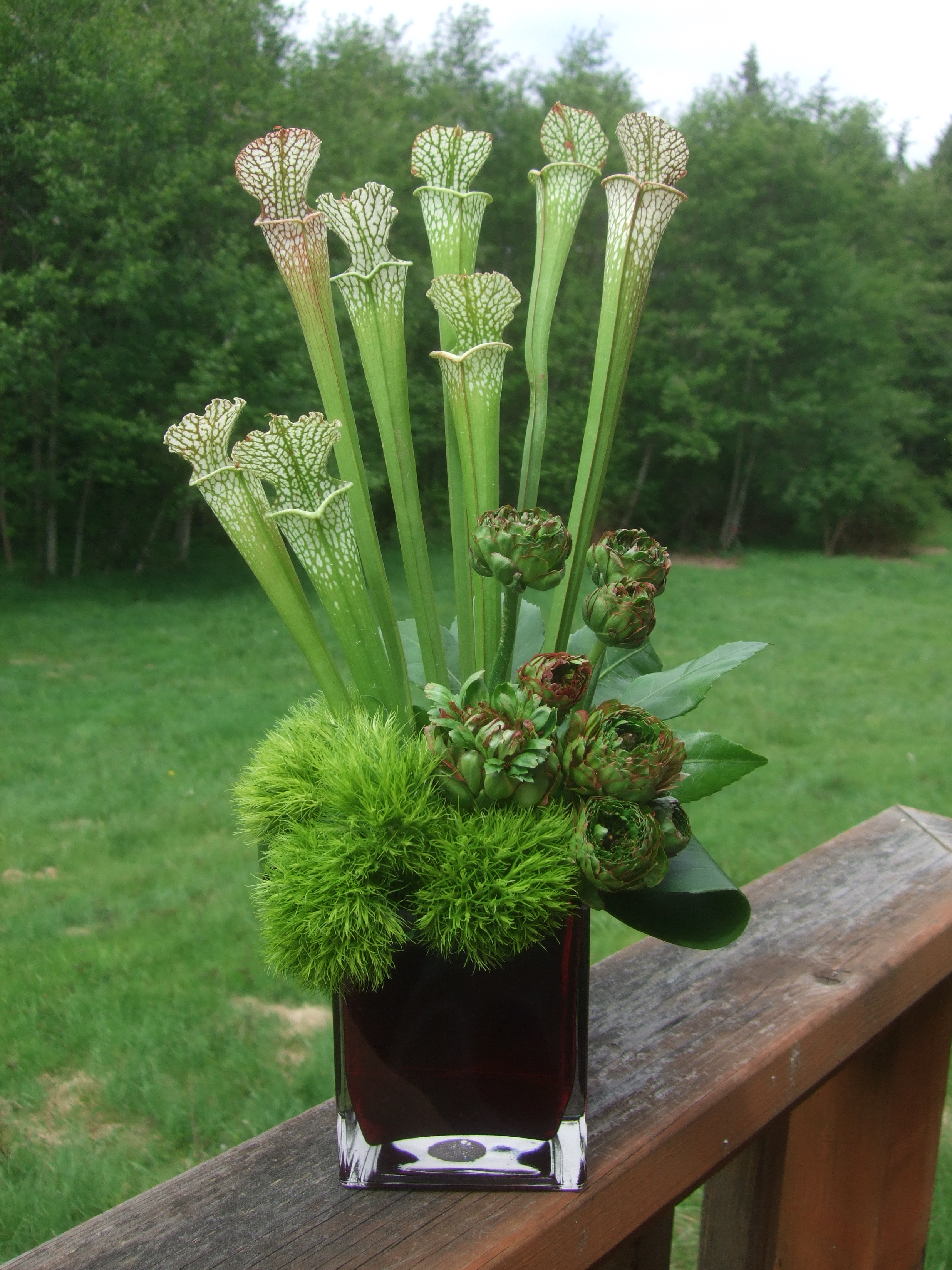 I love Cobra Lilies!