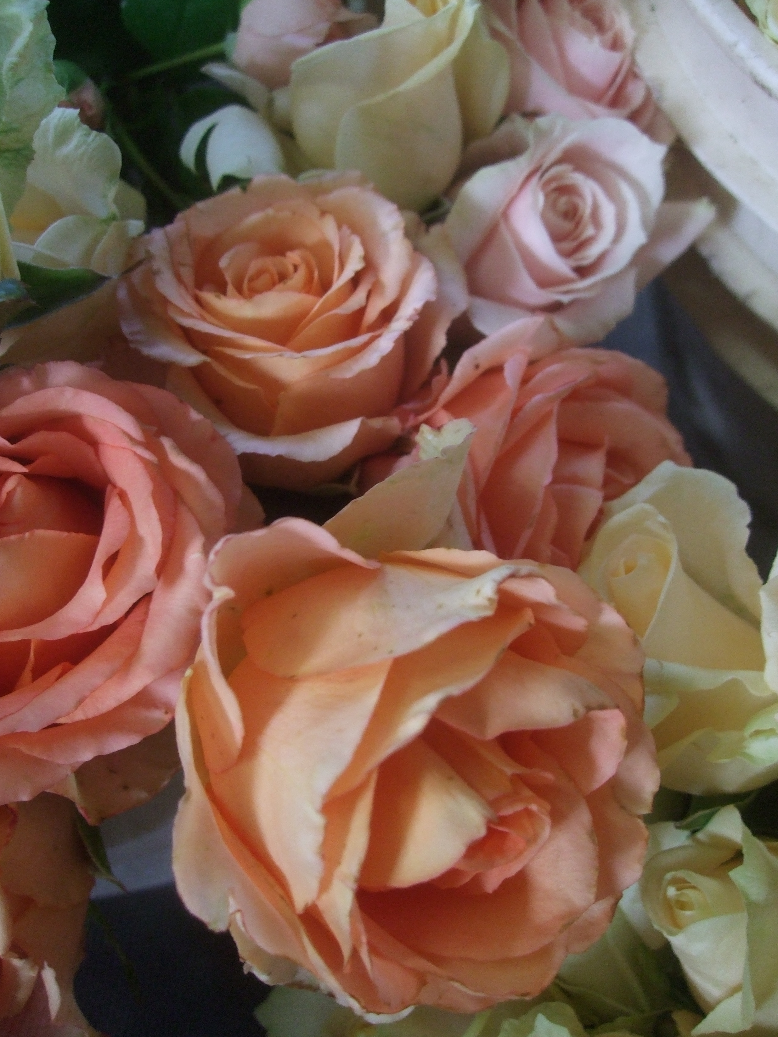 caramel antike, peach avalanche, and maria therese rose