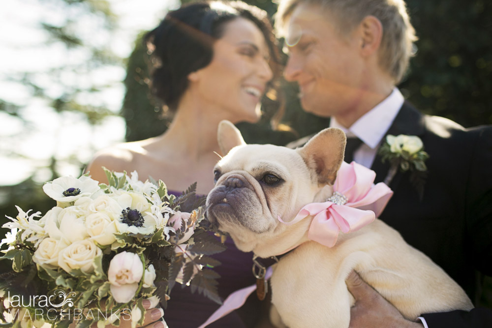 Seattle Wedding couple at Canlis Restaurant with french bulldog and flowers by whidbey island florist Vases Wild