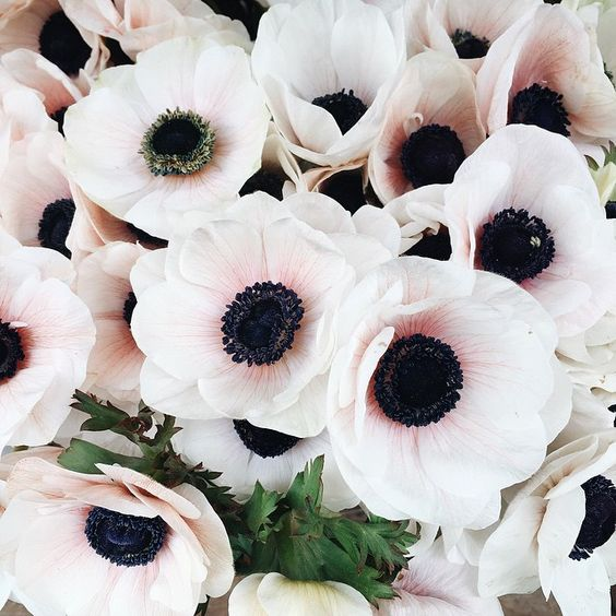 one of the best Valentine's Day flowers is Anemone