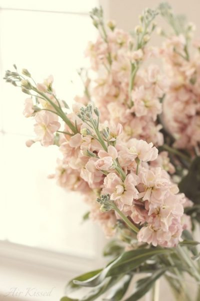 fragrant stock adds scent to Valentine's Day flowers