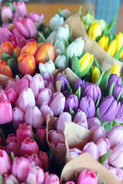 tulips are a classic spring Valentine's Day flower