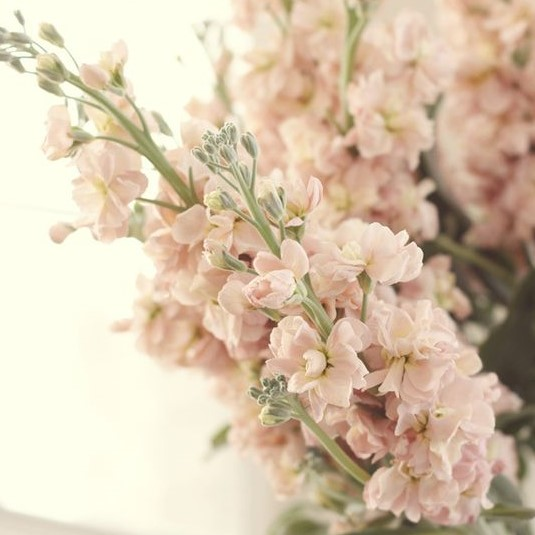 Stock brings fragrance to summer wedding bouquets