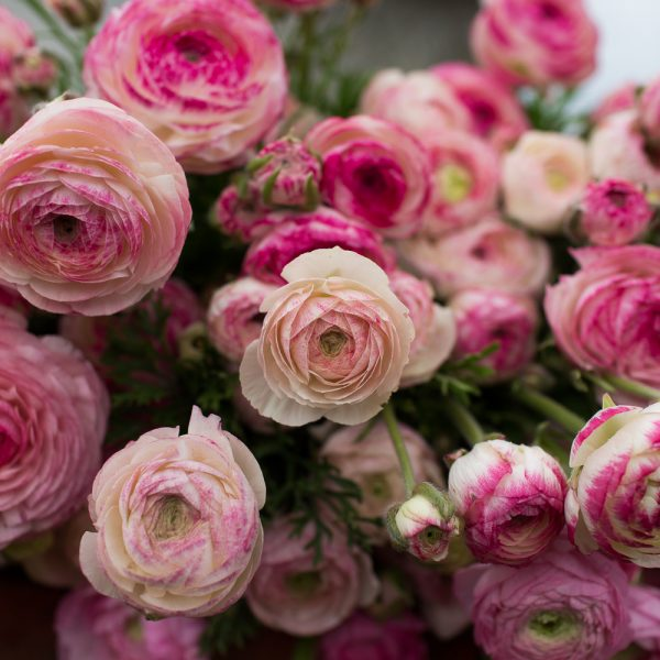 Best spring wedding flowers tobey nelson weddings events ranunculus junglespirit Image collections